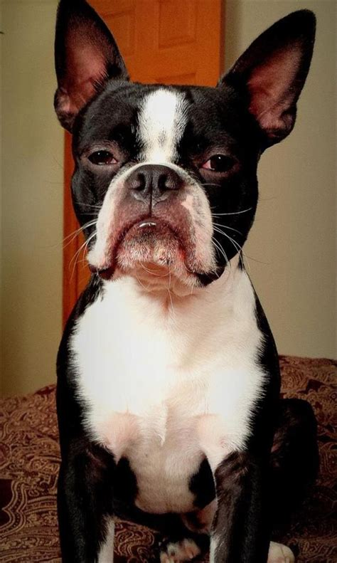Animals Are The Masters Of The Stink Eye 20 Pics
