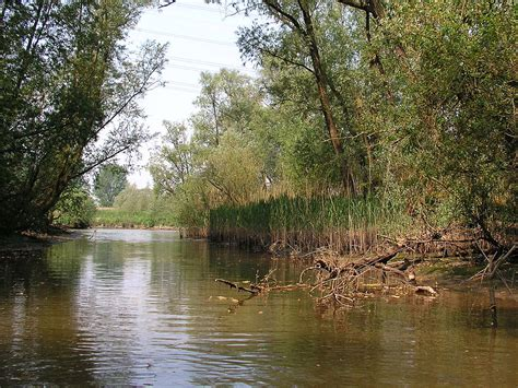 Biesbosch National Park – Travel guide at Wikivoyage