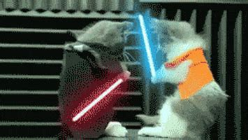 Jedi Kittens GIFs - Find & Share on GIPHY