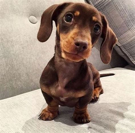 The Cutest Sausage Dogs on Instagram | POPSUGAR Home Australia