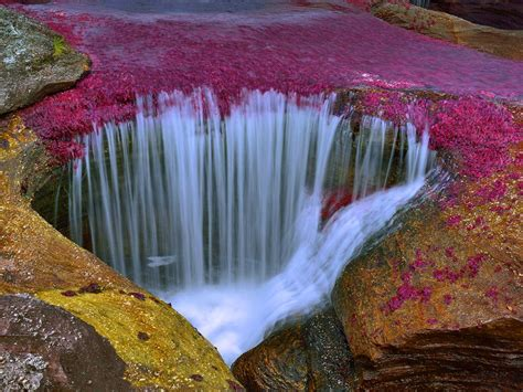 Cano Cristales River In Colombia An Amazingly Beautiful