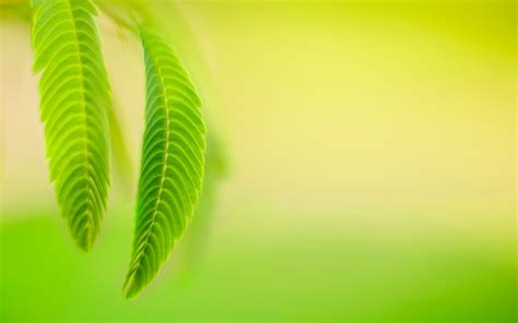 nature, Leaves, Macro, Simple Background Wallpapers HD