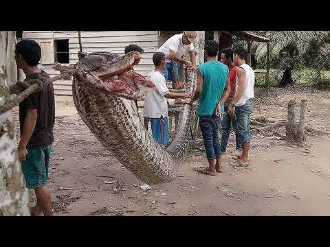 13 Big Snakes In The World In Europe - YouTube