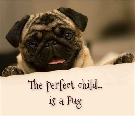 """Join the Pugs on Twitter: """"Sweet Child of Mine! Pugs are"""